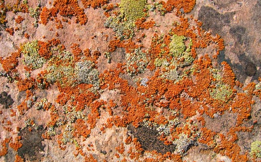 where is all the lichen on the rock?