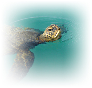 sea turtle viewing